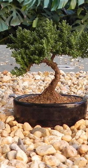 www.artezensacional.com Arte Zensacional, recuerdos, regalos corporativos y centros de mesa, con significado zen.