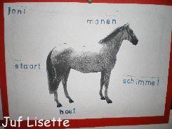 woordveld paard. groep 3 kan bvstempelen als wktk in de schrijfhoek