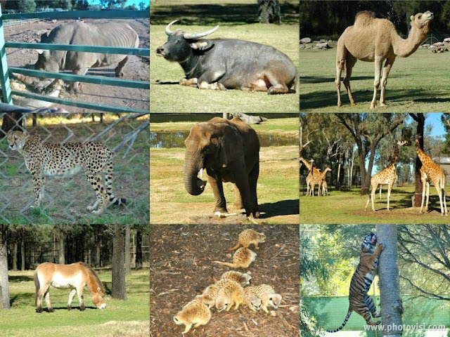Taronga Western Plains Zoo Dubbo NSW Australia
