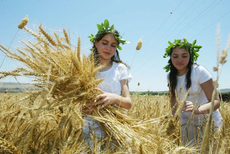 festival of shavuot