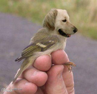 hund+fågel ha ha