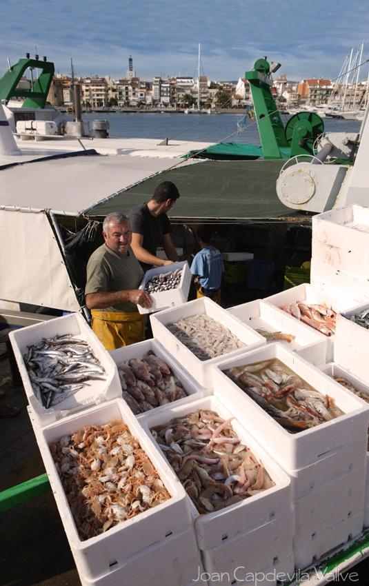 Pescadores en el puerto de Cambrils antes de empezar la subasta de pescado.... Província de Tarragona, Catalunya, Spain