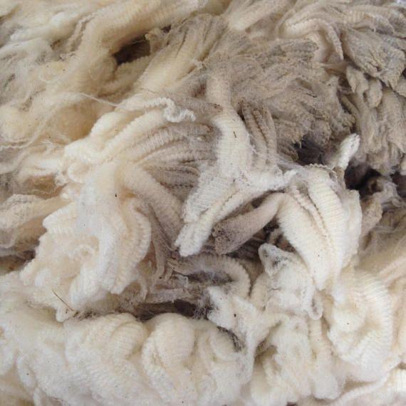 Whole Merino Fleece Ultra Fine Raw Fleece