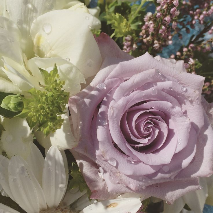 Pale lilac rose  www.madebyme.it