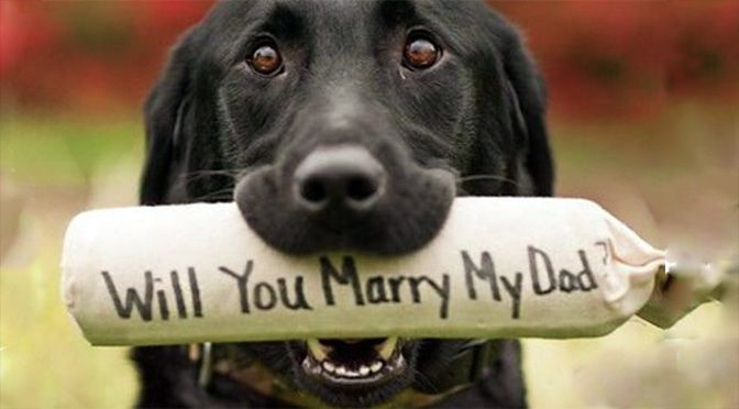 17 Dogs Who Helped Their Owners Pop the Question