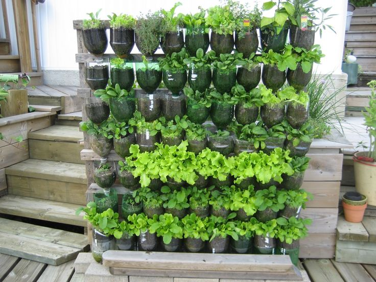 vertical garden soda bottles