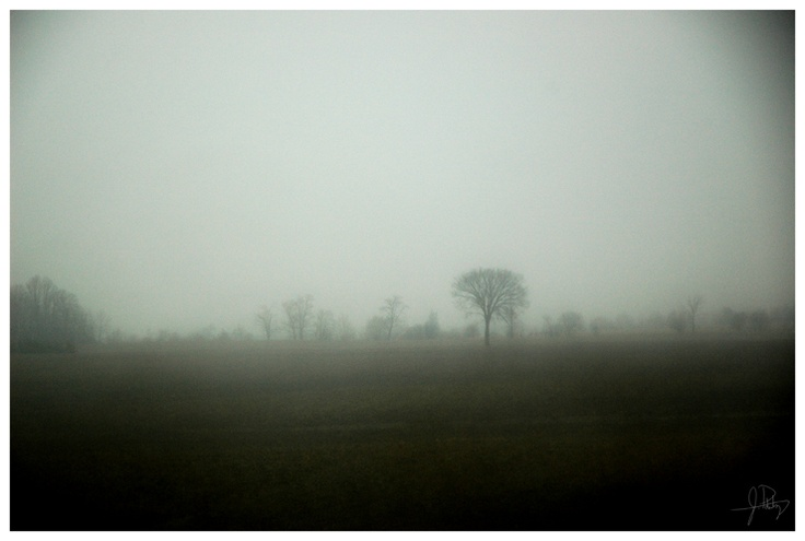 """Tree in the Mist"" Photography by Life in a Lens: Galleries, Life, Mists, Trees, Lens, Photography"