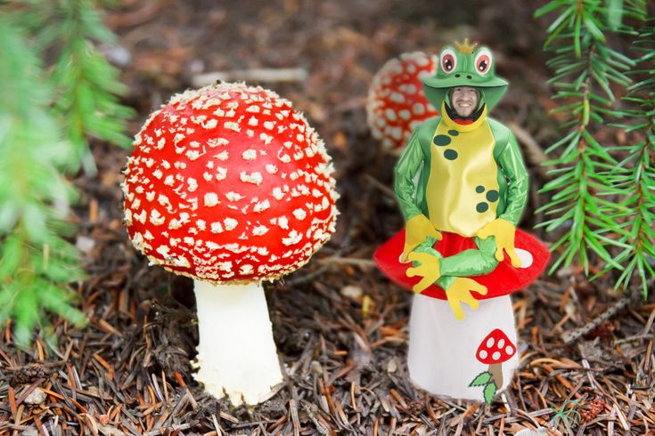 Cool fairy tale costume, like homemade. Frog on fly agaric