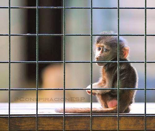 Dentro de los muros de cada zoológico y de cada circo, existen almas torturadas con ojos vacíos y espíritus rotos.