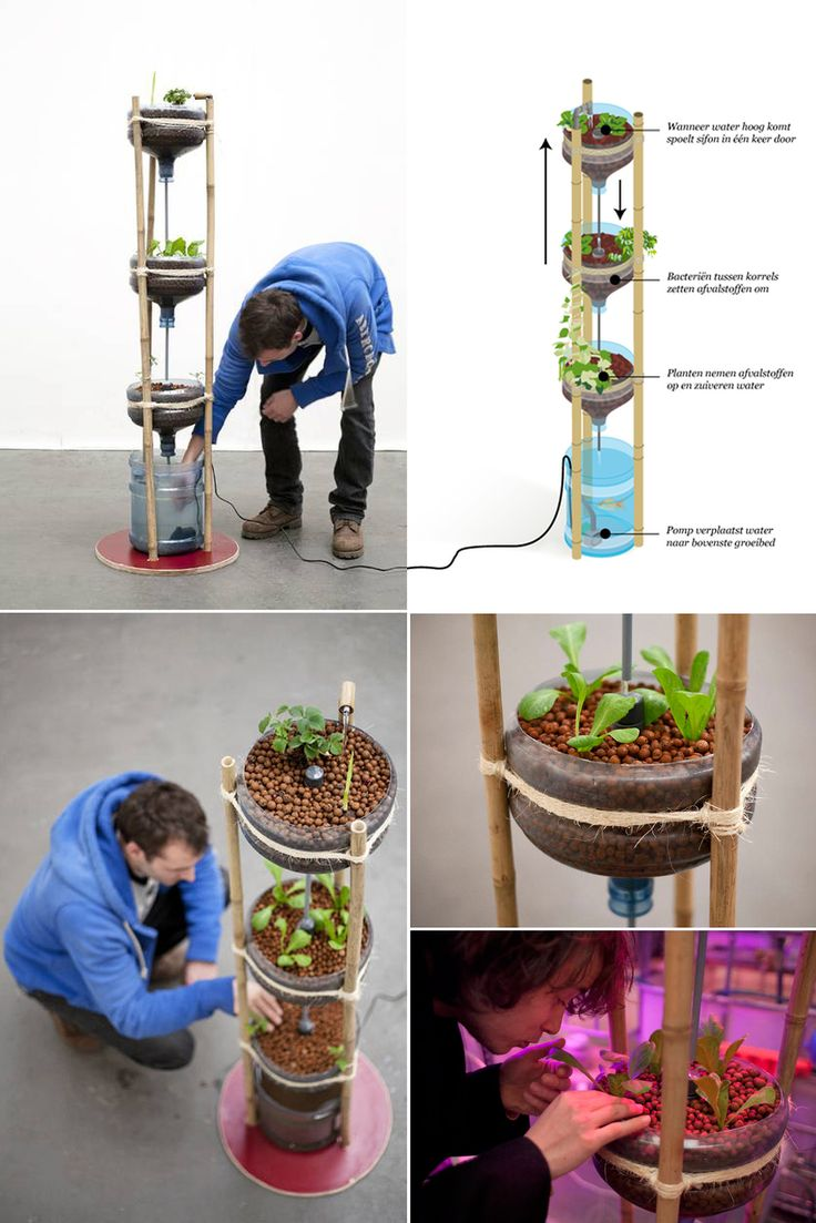 Sistema aquapónico feito de garrafões de água e pedaços de bambu.