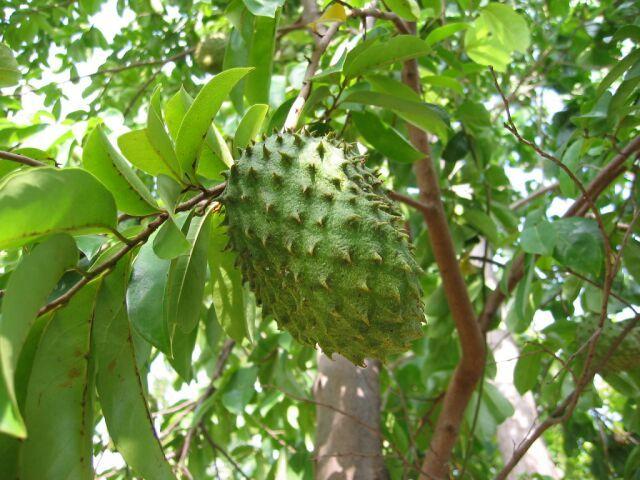 COROSSOL | Fruits exotiques