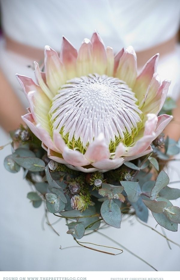 King protea, eucalyptus - what more do you need?