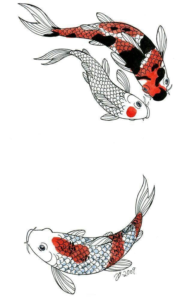 которая готова японские рыбки кои рисунок сочетают