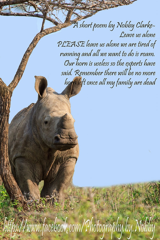 A poem about our beautiful Rhinoceros. I just love these animals