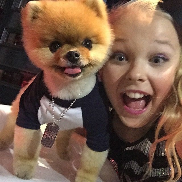 """Jiff the Pomeranian (@jiffpom) w/ JoJo Siwa — Joelle Joanie """"JoJo"""" (b. 19 May 2003 in Omaha, Nebraska, but now lives in L.A.):  Dancer, singer, actress & YouTube personality. She appeared for 2 seasons on """"Dance Moms"""" along w/ her mother, Jessalynn Siwa. JoJo was 1st intro. on the 2nd season of """"Abby's Ultimate Dance Competition."""" She's also known for """"Lip Sync Battle Shorties"""" & her singles """"Boomerang"""" & """"Kid in a Candy Store."""""""