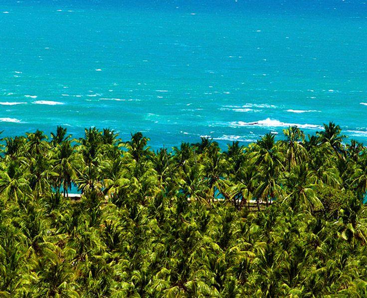 Um verdadeiro paraíso. Barra de São Miguel, Alagoas. #Viagem #Brasil
