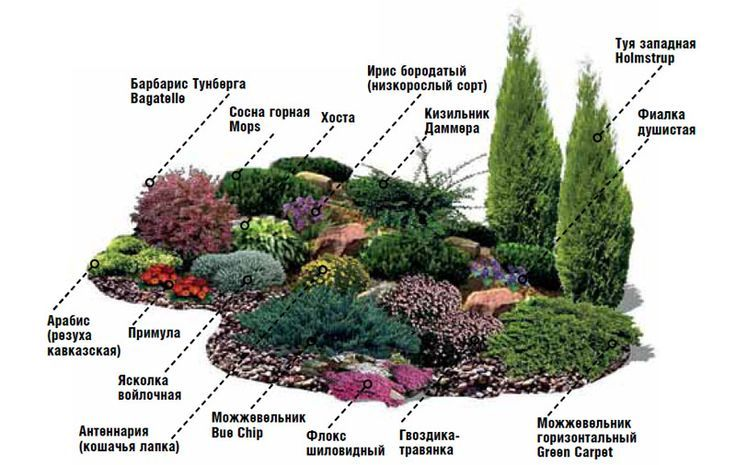 Любителей хвойных растений не оставит равнодушными альпийская горка во главе с туей