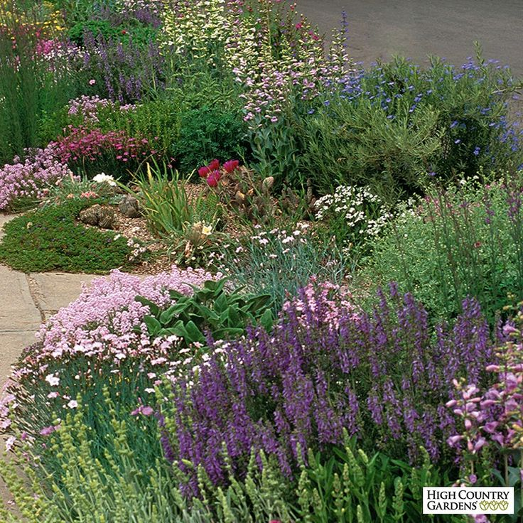 This low-growing collection is ideal for hot, sunny, problem areas like those found against garage walls and along driveways and roads. With this garden, you can easily create a colorful, long blooming, low maintenance flower bed. Drought resistant/drought tolerant plant (xeric). Designed by Lauren Springer Ogden. Mixed pot sizes. Save $25 off the single plant price of 253.73!