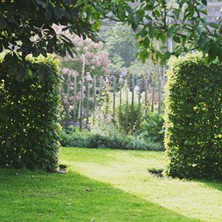 Ab durch die Hecke #garten #herbsttag #autumn #garden #buche #formschnitt #sonnenschein