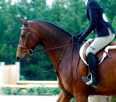 hunter jumper-one day I will ride again :)