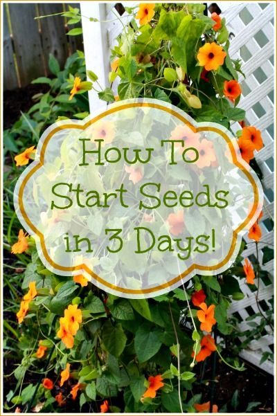 How to Start Garden Seeds in 3 Days (Neat trick I have never seen before)
