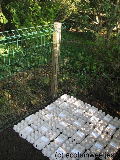 Composteren: leg eerst een grondlaag van kartonnen eierdoosjes om je composthoop te starten