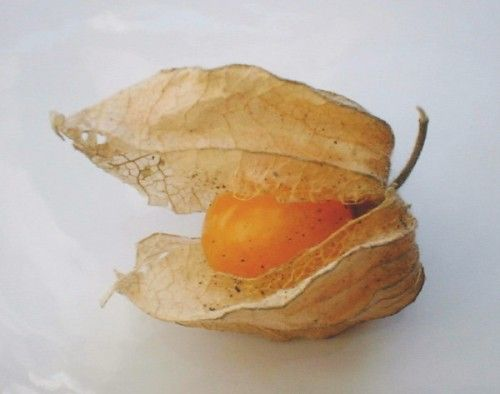 Cape Gooseberry - planted and can't wait to try them