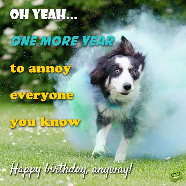 140 best Funny Birthday Wishes images – Funny Birthday Messages for Cards
