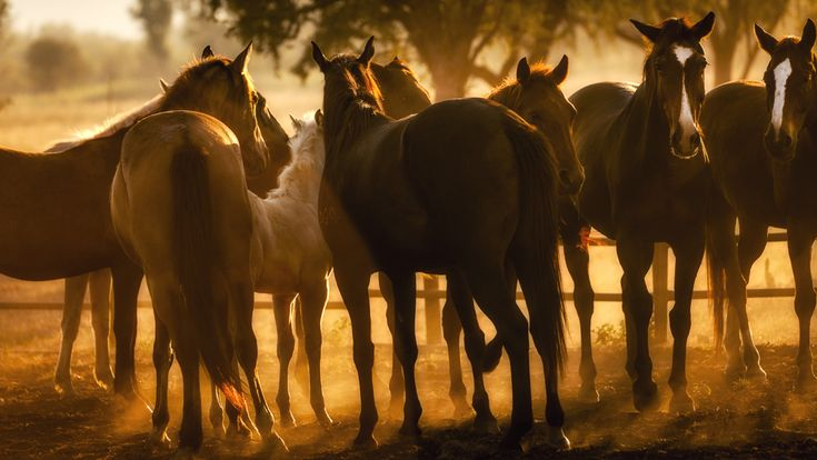Diggers Rest Station is a working cattle station in the Kimberley, near Wyndham & Kununurra, Western Australia, offering horse rides & accommodation