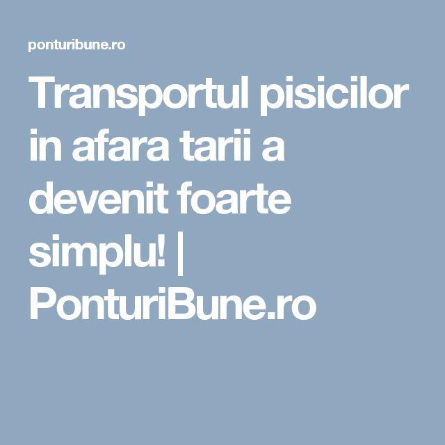Transportul pisicilor in afara tarii a devenit foarte simplu! | PonturiBune.ro