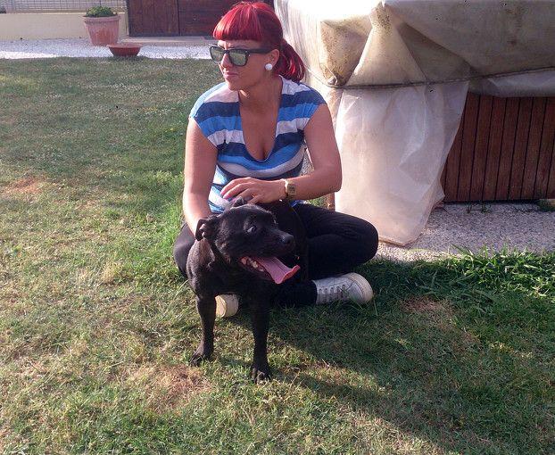 dog , dogs , staffordshire bull terrier , staffy , staffie , puppy , puppies