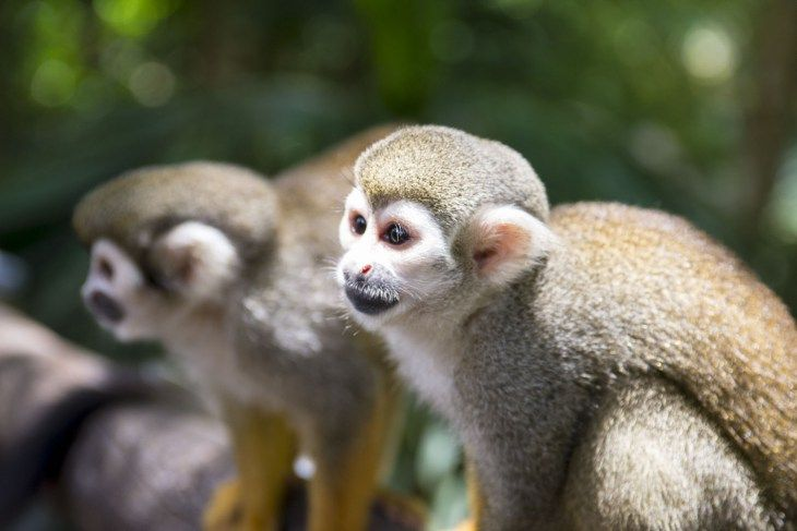 5 Can't Miss Adventures in the Dominican Republic: Playing with Squirrel Monkeys