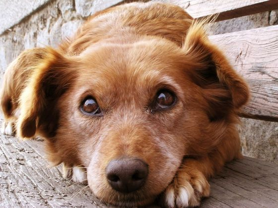 How Much Do You REALLY Know About Dogs? Take this quiz and find out.