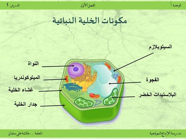 الخلية النباتية Student Map Map Screenshot