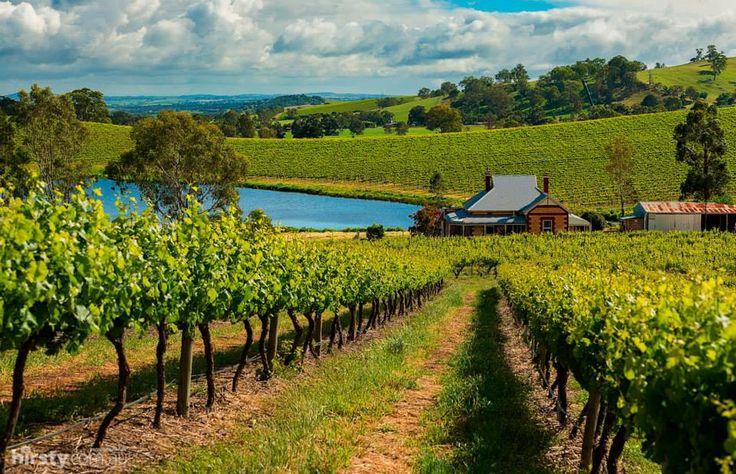 #Barossa Valley, South Australia. #wine