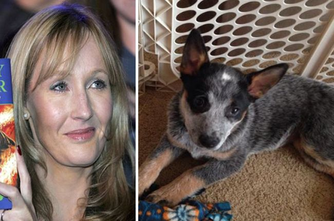 J.K. Rowling Suggests NOT Naming Your Adorable Puppy After Harry Potter Villains