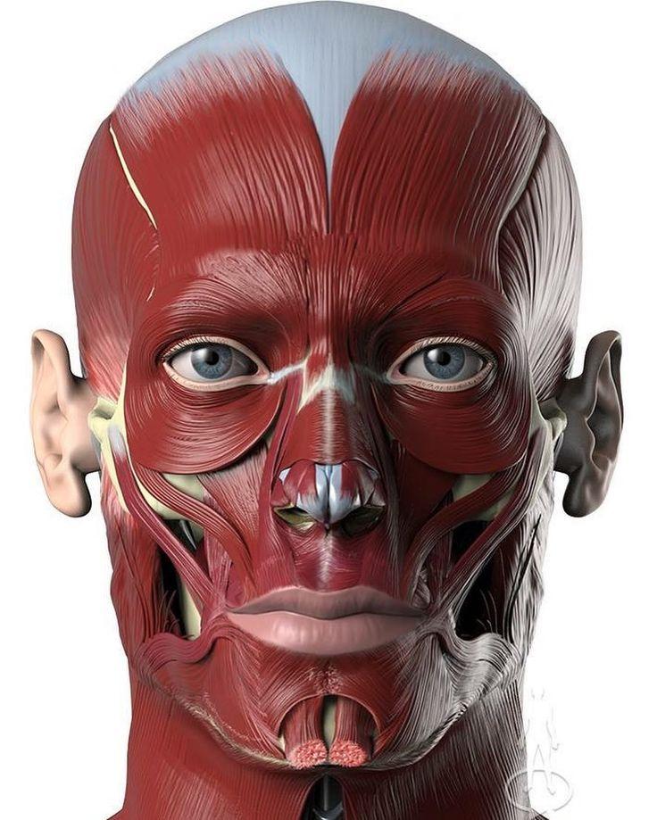 мышцы лица фото картинки расширение вен