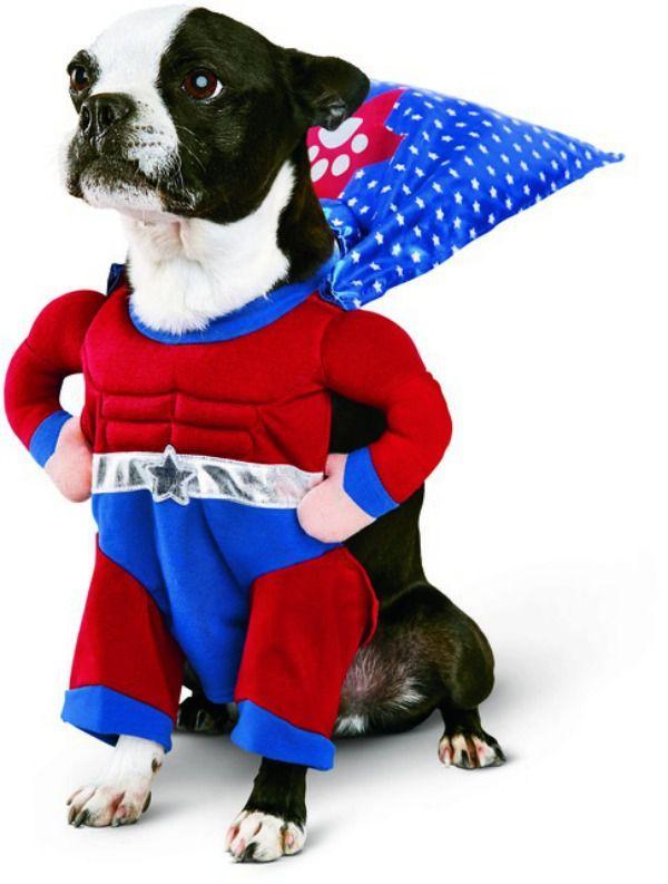 Best 25+ Funny dog halloween costumes ideas on Pinterest ...