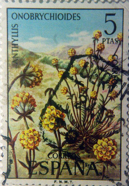 Anthyllis onobrychoides