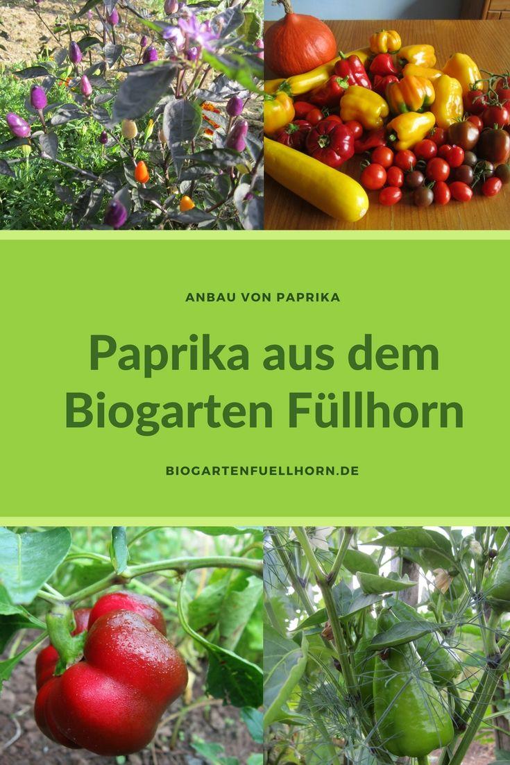 19 besten Paprika Bilder auf Pinterest   Anleitungen, Chili und Gemüse