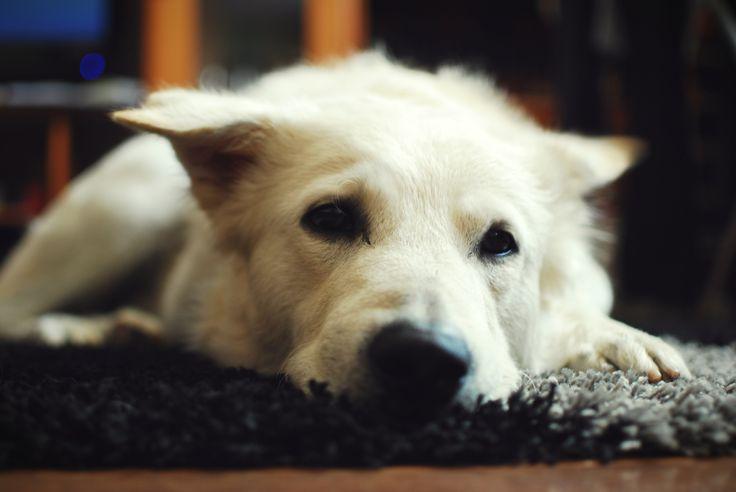 Covorul cel nou devine covorul lui preferat. :)