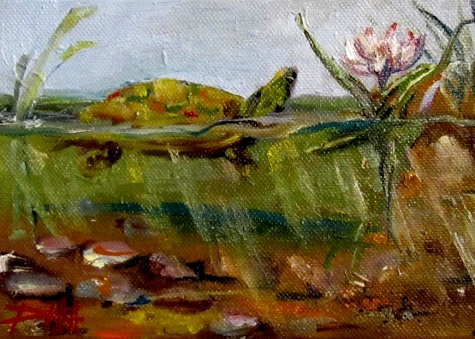 Turtle Pond, painting by artist Delilah SmithTotally Turtles, Tortoises Art Miscellaneous, Artists Delilah, Gallery Artists, Daily Painters, Turtles Ponds, Art Fish, Dailypainters Com, Art Painting