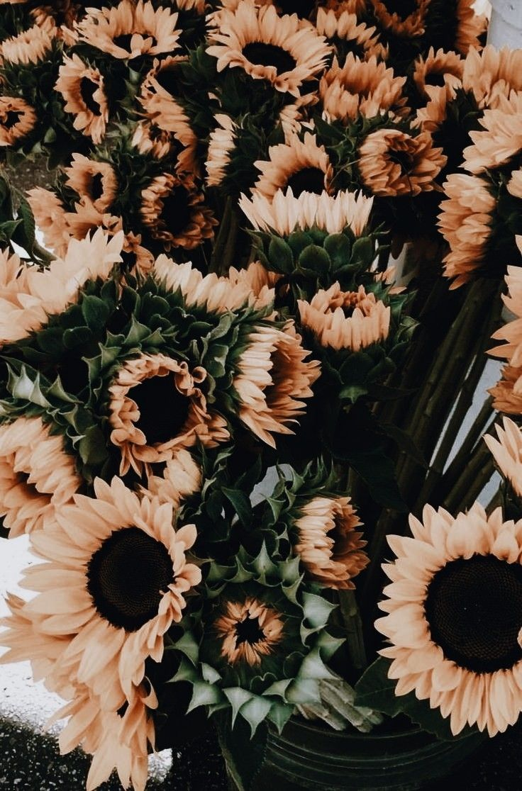 Pinterest Aestheticallyzo Sunflower Wallpaper Flower