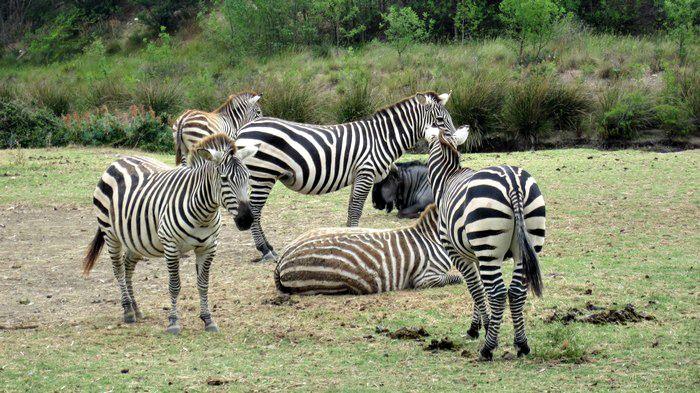 The Réserve Africaine in Sigean, France: safari park meets zoo