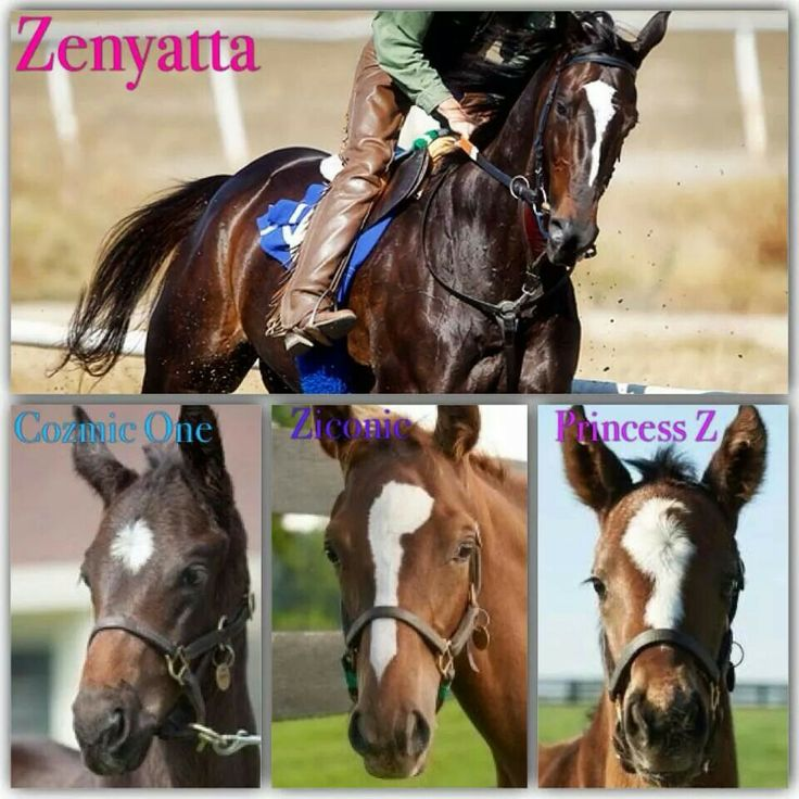 The markings of Zenyatta's offsprings.  (Zenyatta was selected three years in a row (2008–2010) for NTRA's Moment of the Year Award, for her 2008 Ladies' Classic victory, historic 2009 Breeders' Cup Classic victory, and narrow defeat in the 2010 Breeders' Cup Classic.  from Wikipedia)