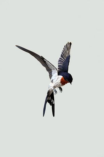 swallow | Diana Beltran Herrara - paper sculpture