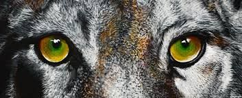 Image result for animal eyes