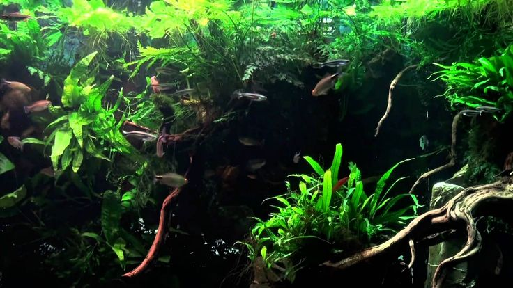 """Large planted tank - African biotope.....This is on my """"wish list"""" to create an ecosystem like this in a 55 gallon tank."""