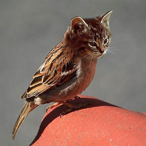 Cat Bird --- I have heard about sitting in a 'catbird' seat