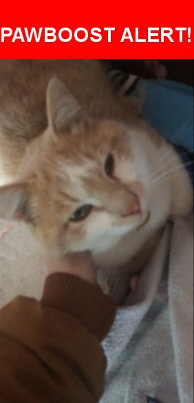 Please spread the word! Ricky Bobby was last seen in Brownsburg, IN 46112.    Nearest Address: Near North County Road 600 East, Brownsburg, IN